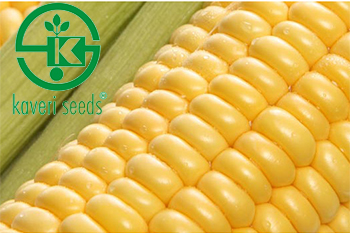 Kaveri Seed reports standalone net loss of Rs 11.44 cr in the March 2019 quarter