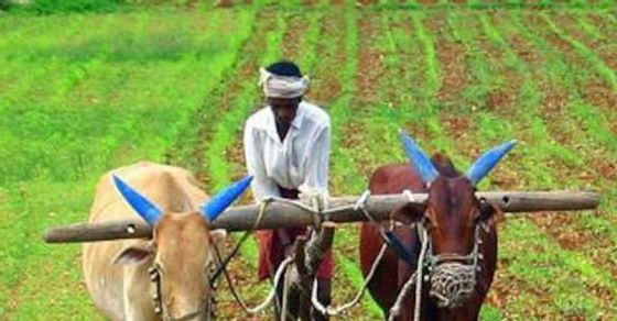 Farmers' Income Can Be Doubled by 2022-23 if Farm Laws are Aptly Enforced Now